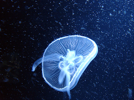 electric jellyfish screenshot